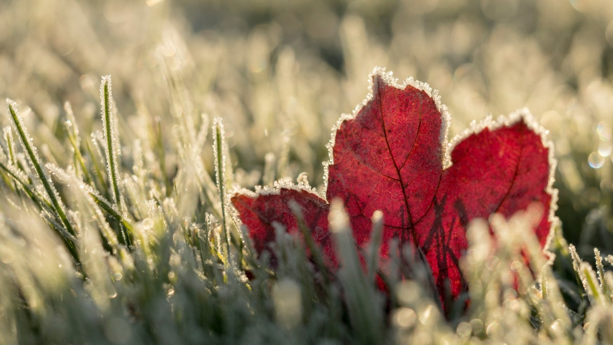 leaf-winter-featured